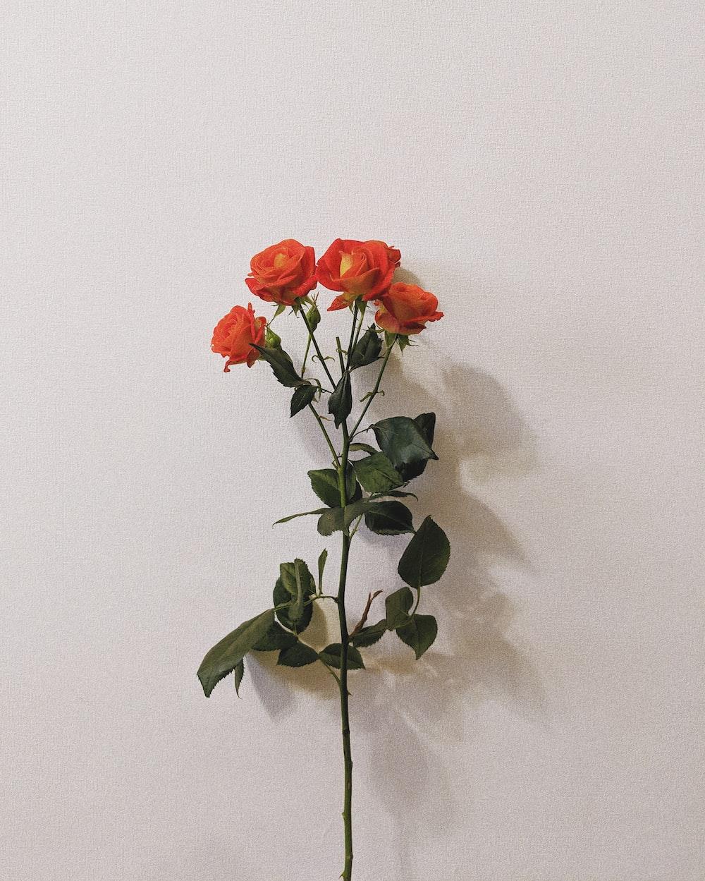 four orange-petaled flowers