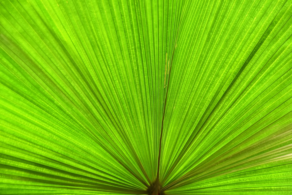green leaf on focus photography