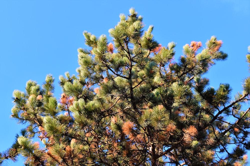 green fine tree under blue sky