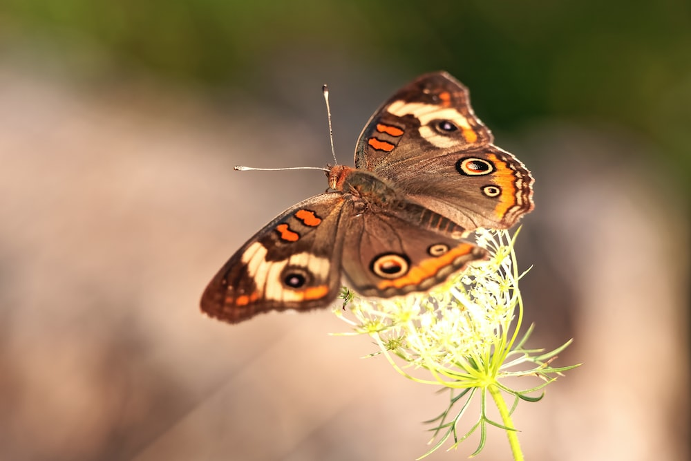 brown butterfly on selective focus photography
