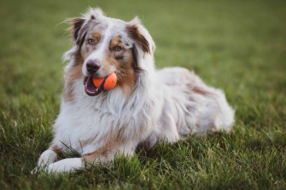 selective focus photography of dog biting orange ball on green grass field