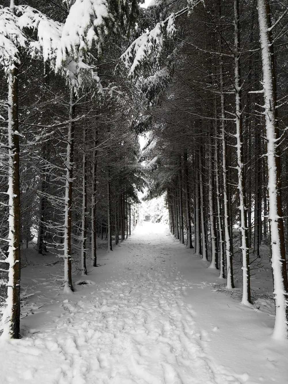 pathway between trees coated with snow
