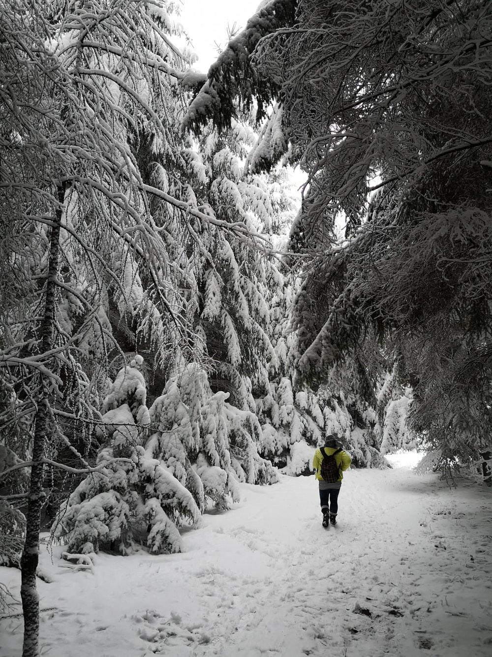 man in yellow jacket near trees coated with snow