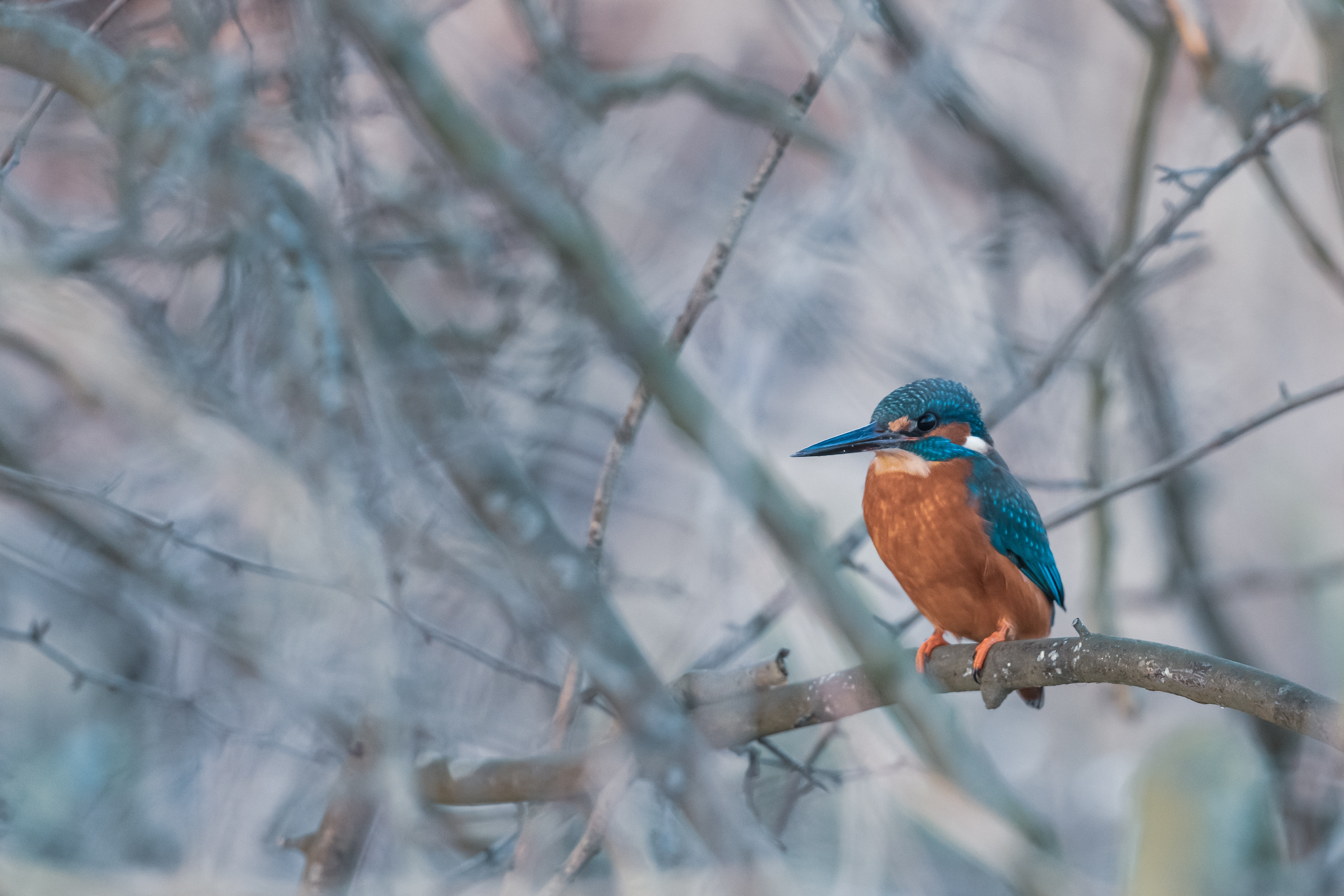 blue and brown bird of tree branch