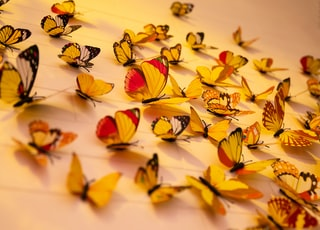 close-up photography of assorted-color butterflies