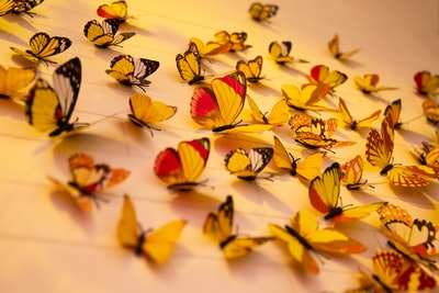 Wall decorations with colorful butterflies