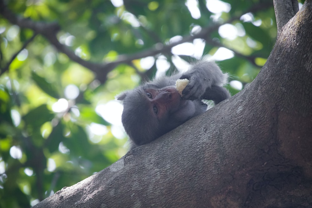 selective focus photography of monkey lying on tree branch while eating