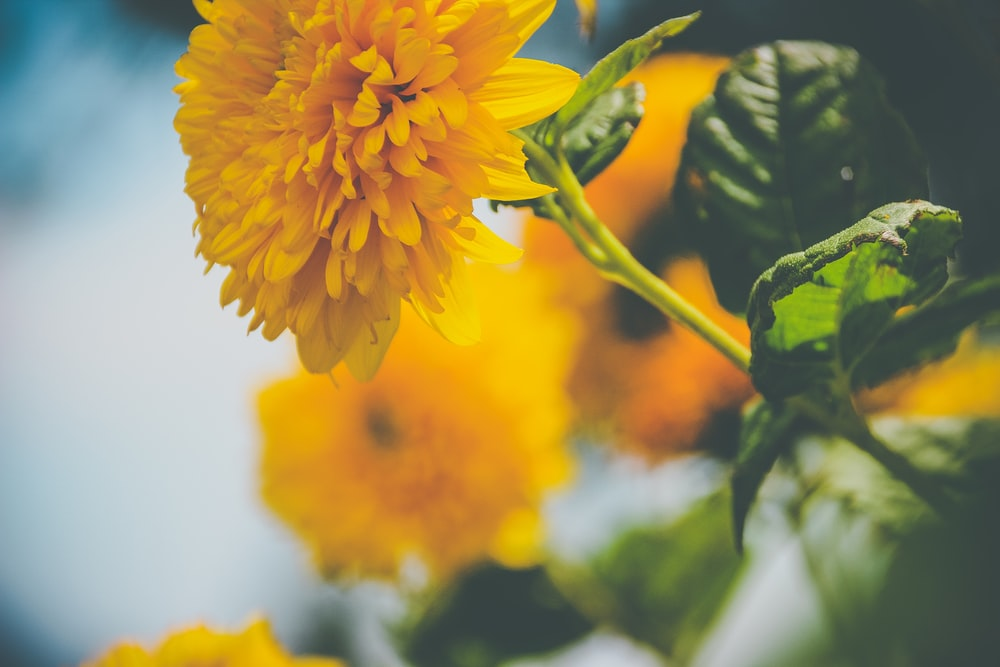 yellow cluster flower in selective-focus photography