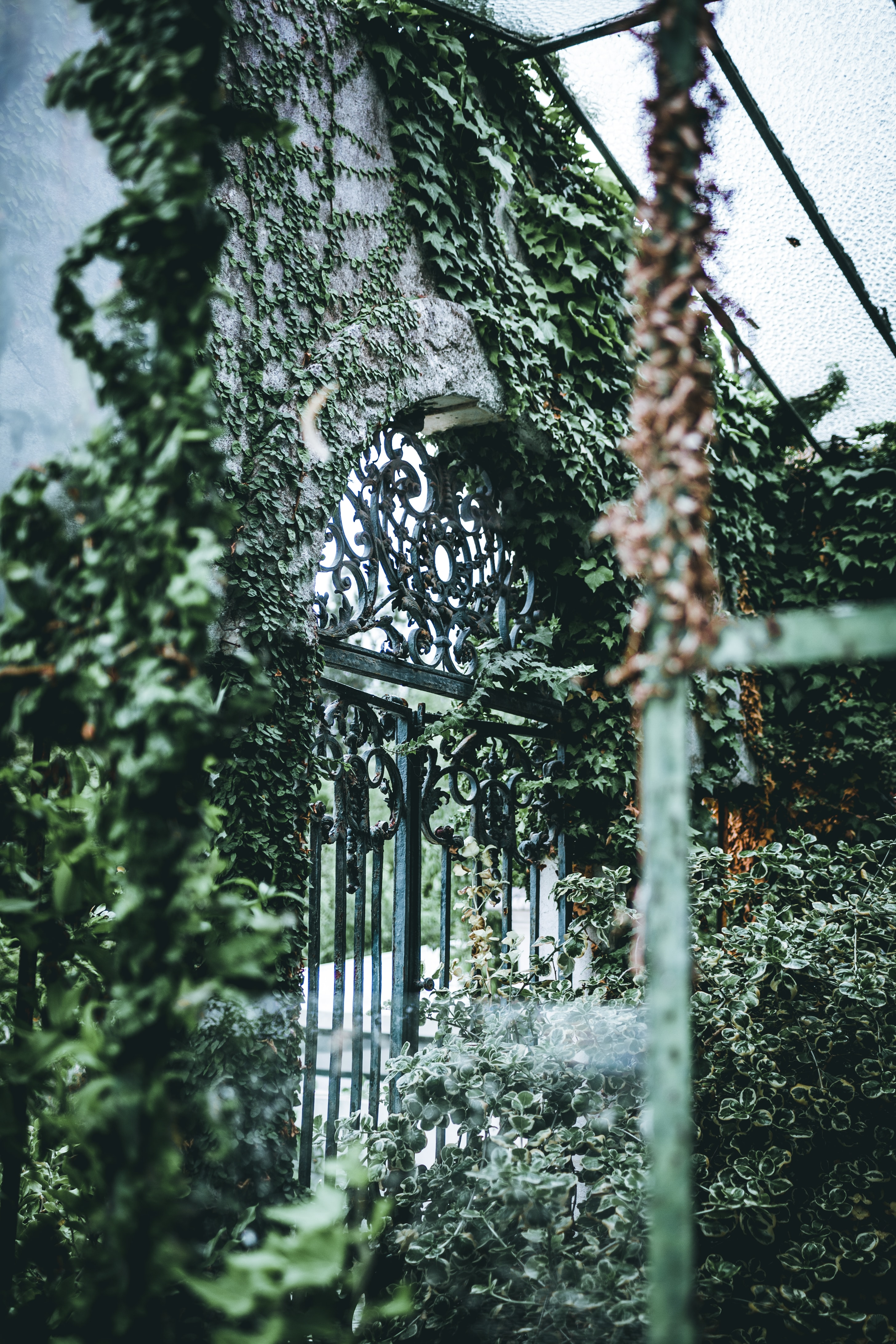 gray and black gate with green-leafed plant