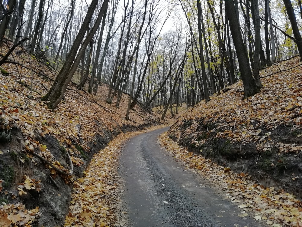 concrete road between forest at daytime