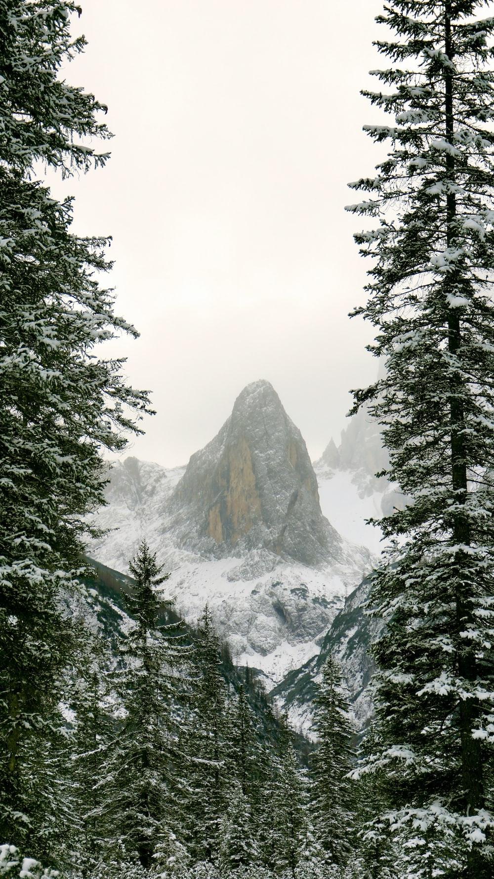 rock hill view between green pine trees