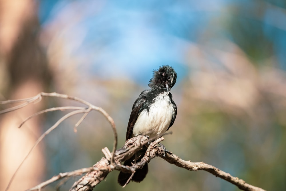 close up photography of black and white bird on tree branch