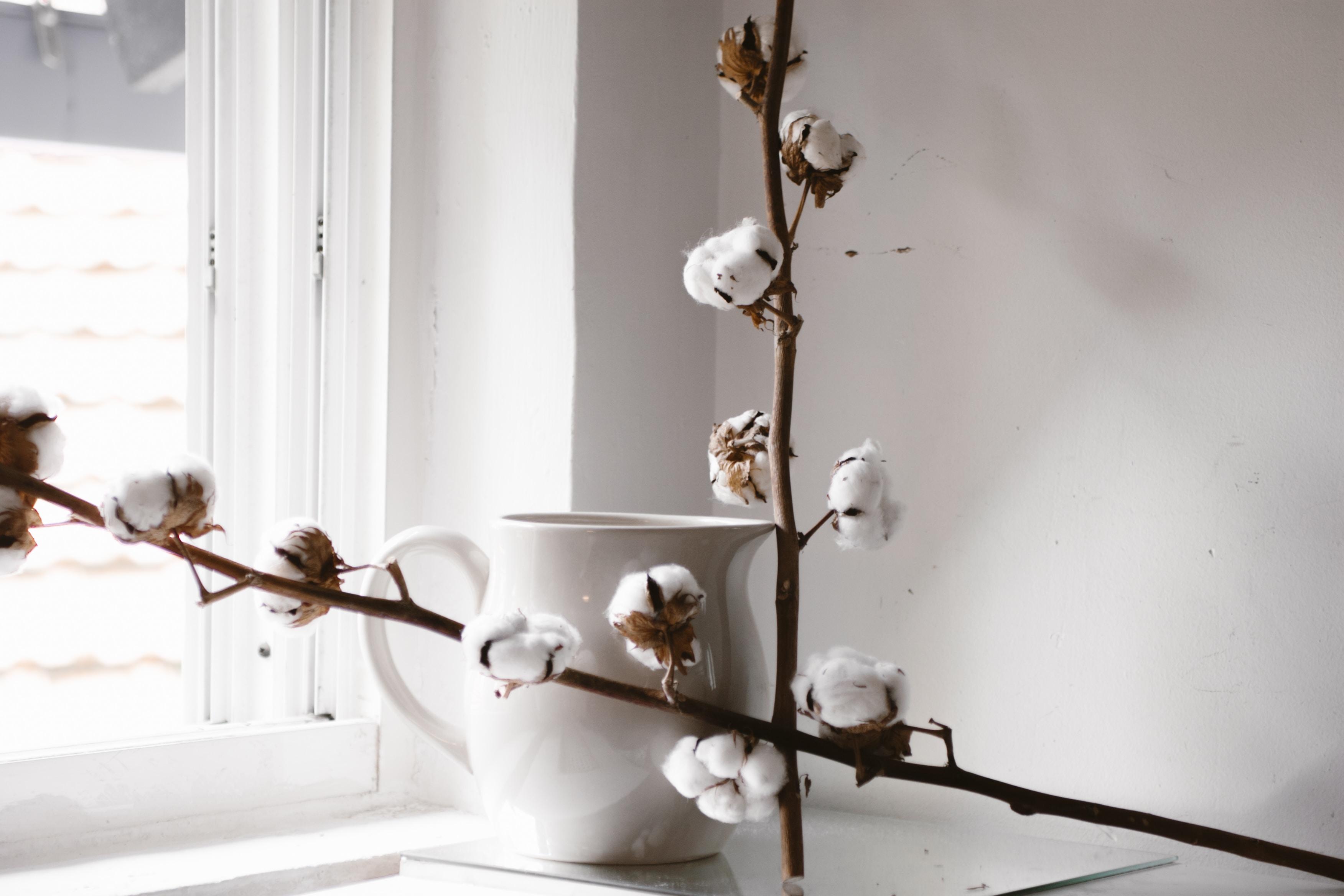 white flowering brown plant beside white ceramic teapot