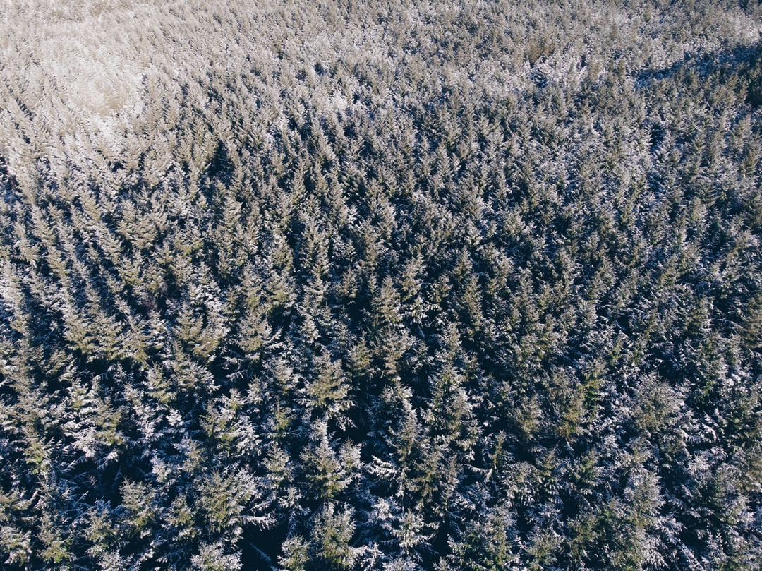 First snowfall of 2019 so we visited one of our favourites, Stainburn forest. From above it's interesting to see something so natural, of this scale, in such an unnatural manner. The photo was taken using a DJI Mavic Air, edited in Lightroom CC, not cropped.