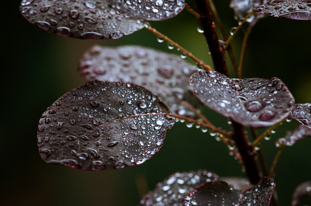 macro photography of water dews on leaves