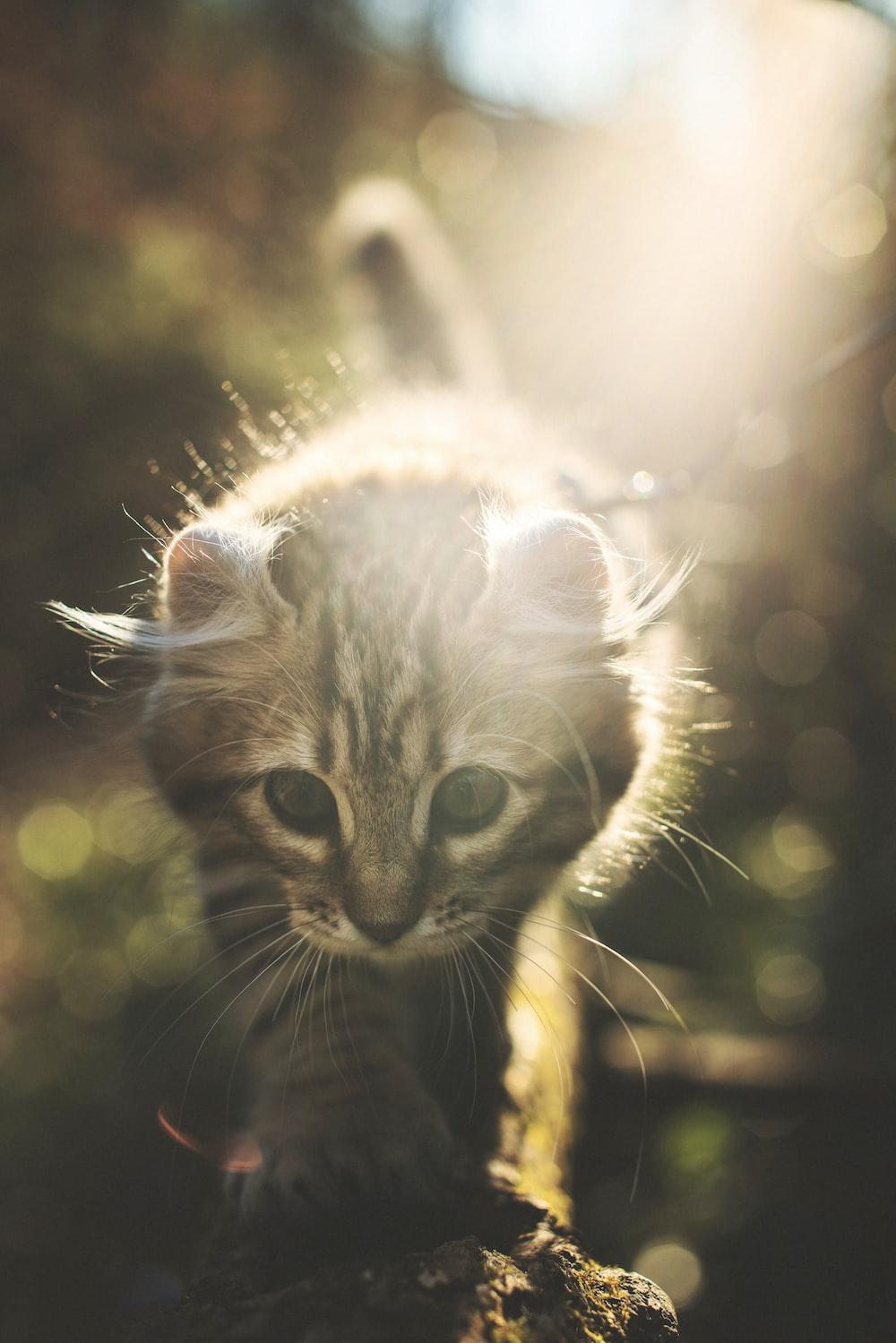 Highland Lynx Pictures   Download Free Images on Unsplash
