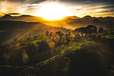 sun piercing through green trees near mountains