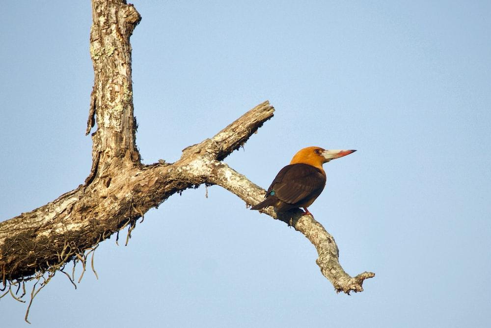 orange long-beaked bird on tree