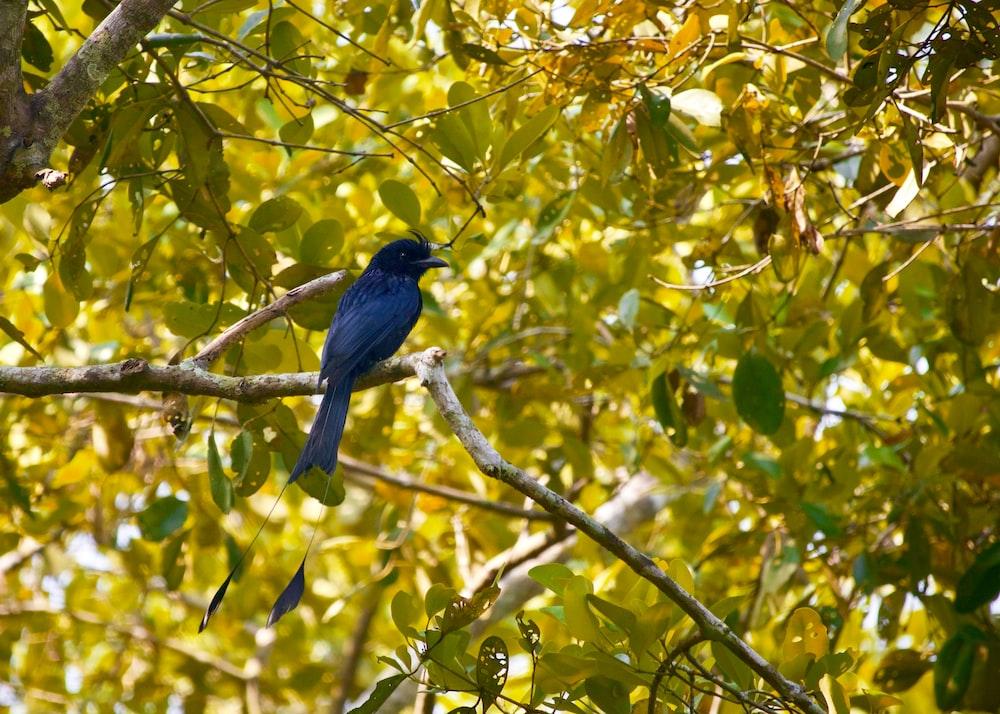 blue bird perching on tree