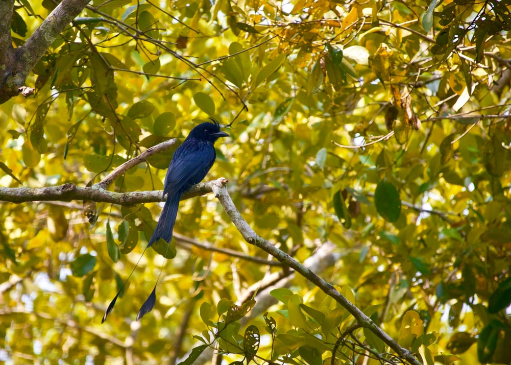 Bird in sunderbans, One of the important Heritage sites in India