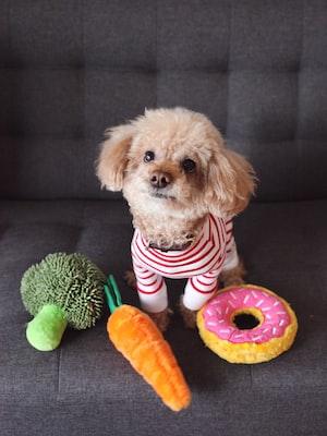 honden speeltjes