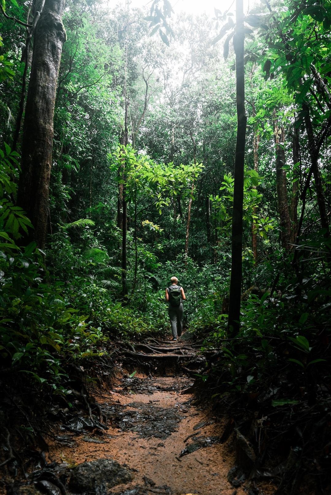 """""""Jungle Walk"""""""