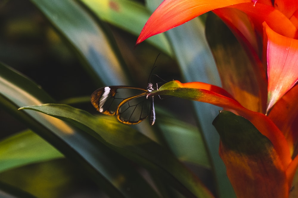 close-up photography of damselfly perch on green and red leaf
