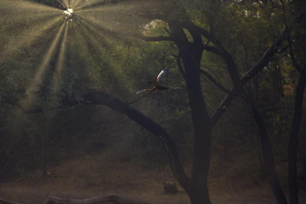 tree under rays