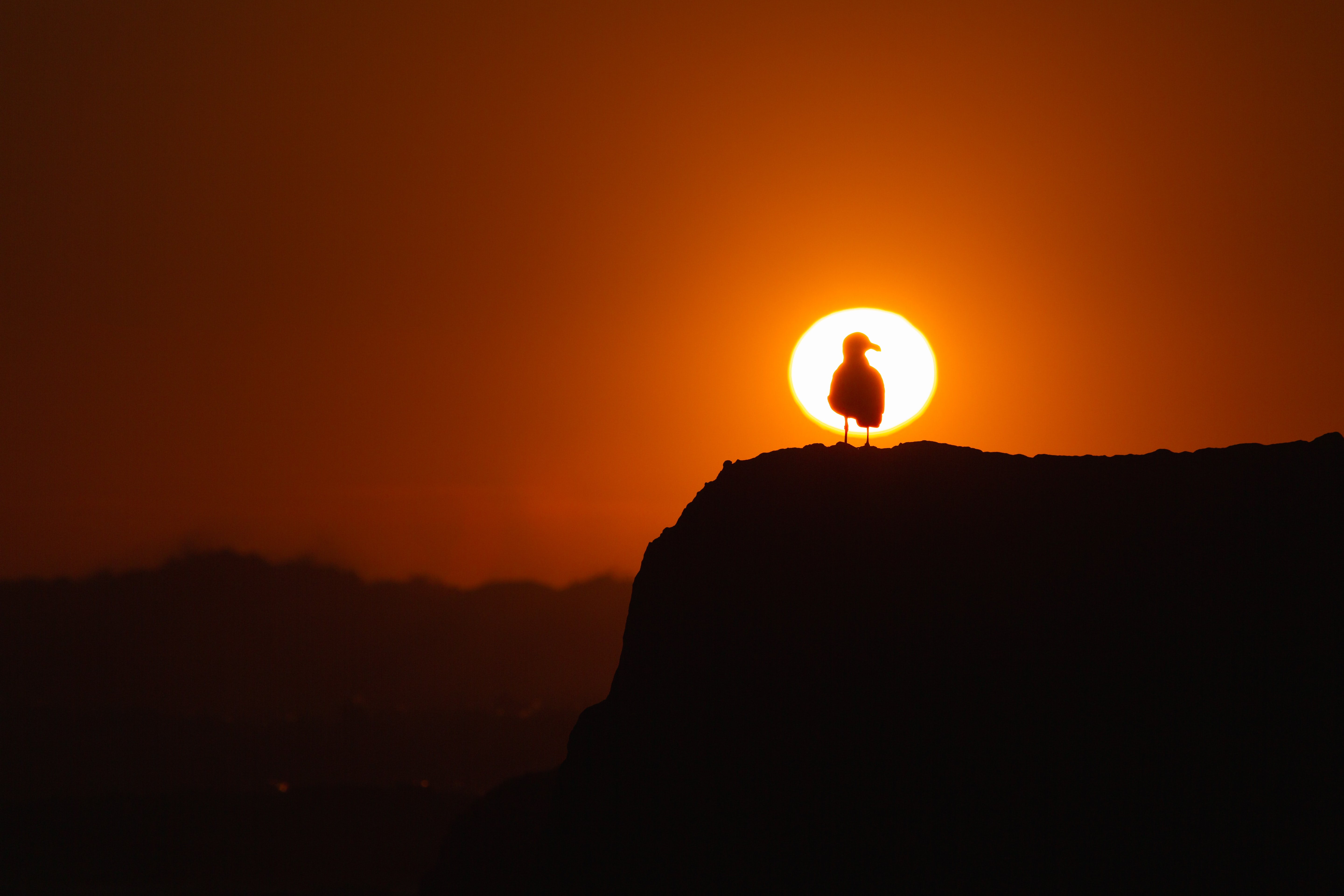 silhouette of bird on rock during golden hour