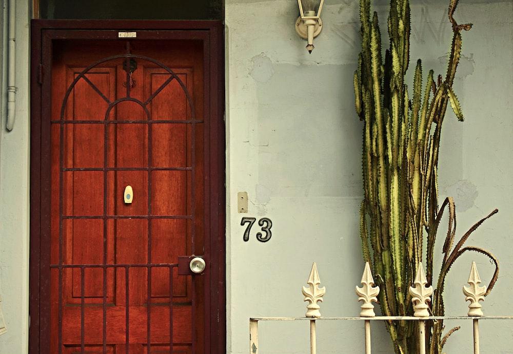 green plants near brown wooden door