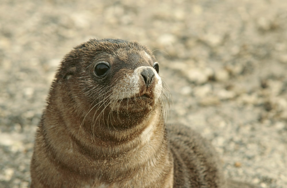 shallow focus photo of brown seal