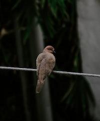 brown bird on gray string