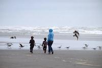 people walking on seashore with birds under white sky