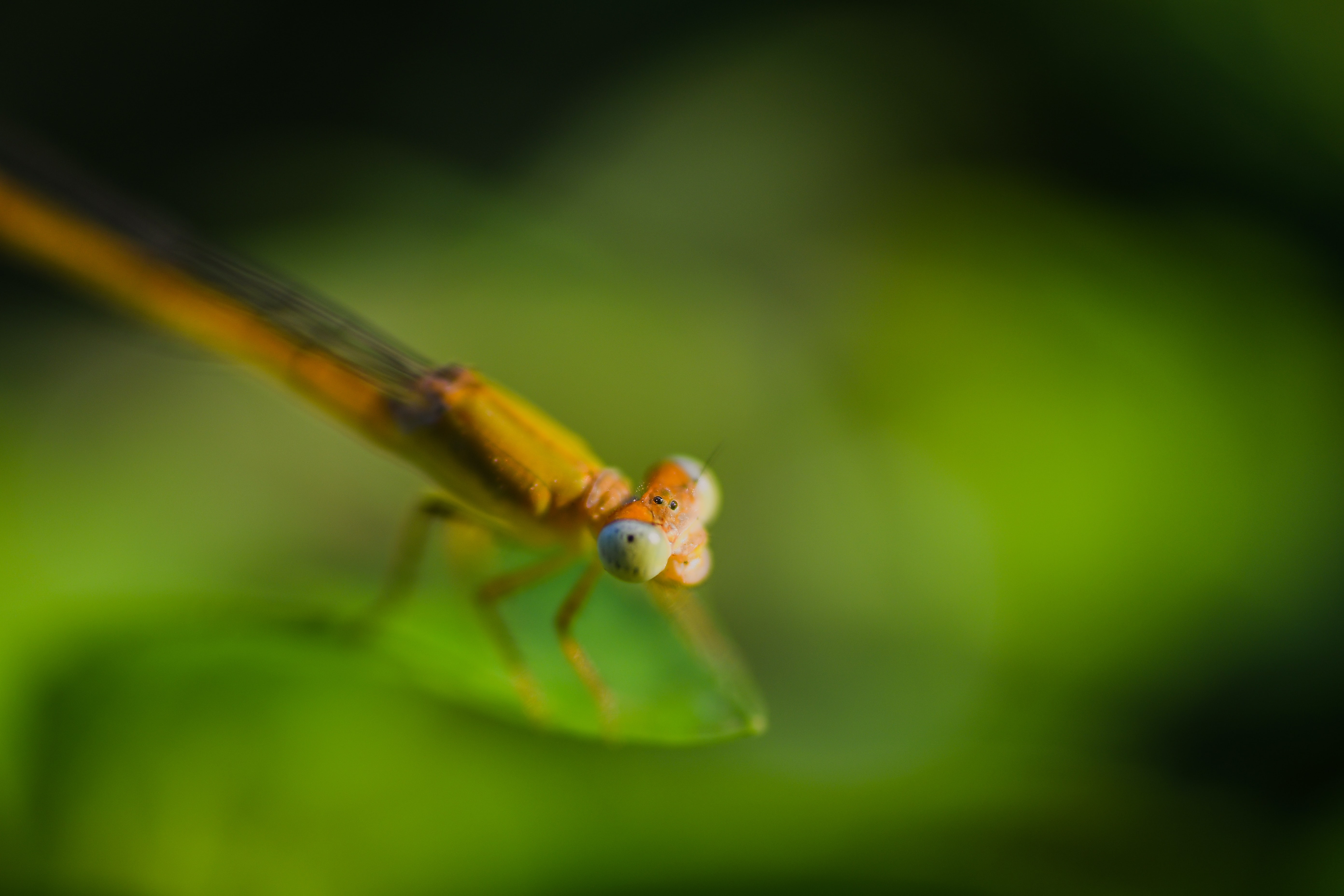 closeup photography of brown dragon fly on leaf