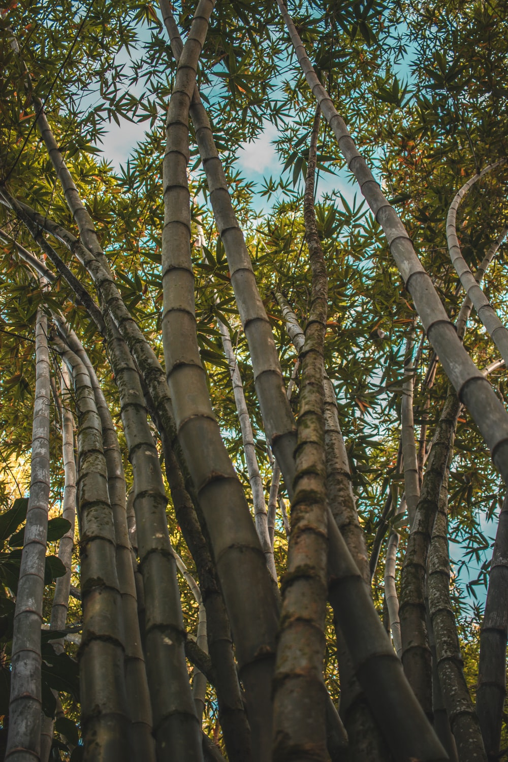 low angle photography of bamboo trees during daytime