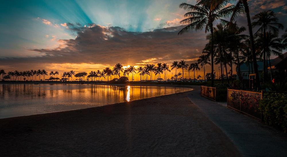 sunlight pierce through palm tree line