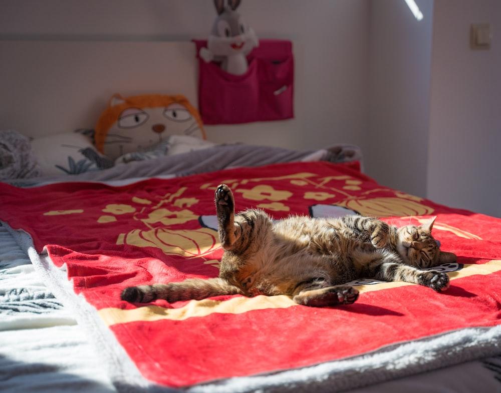 tabby cat on red bedspread