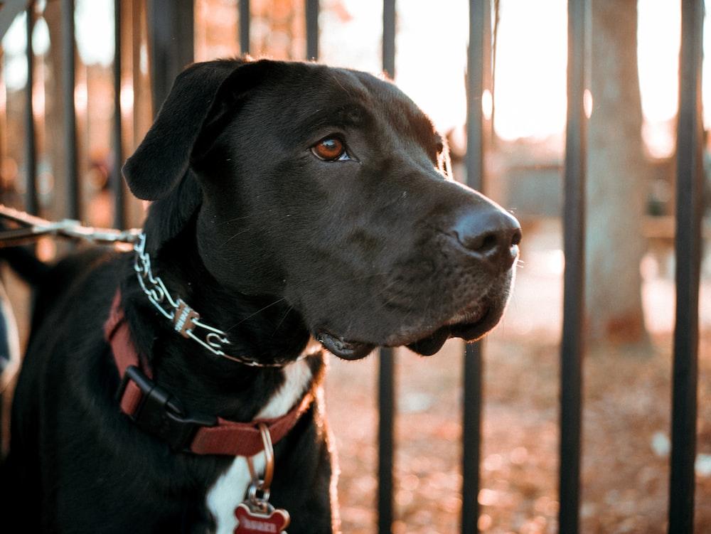 short-coated black dog standing beside railings