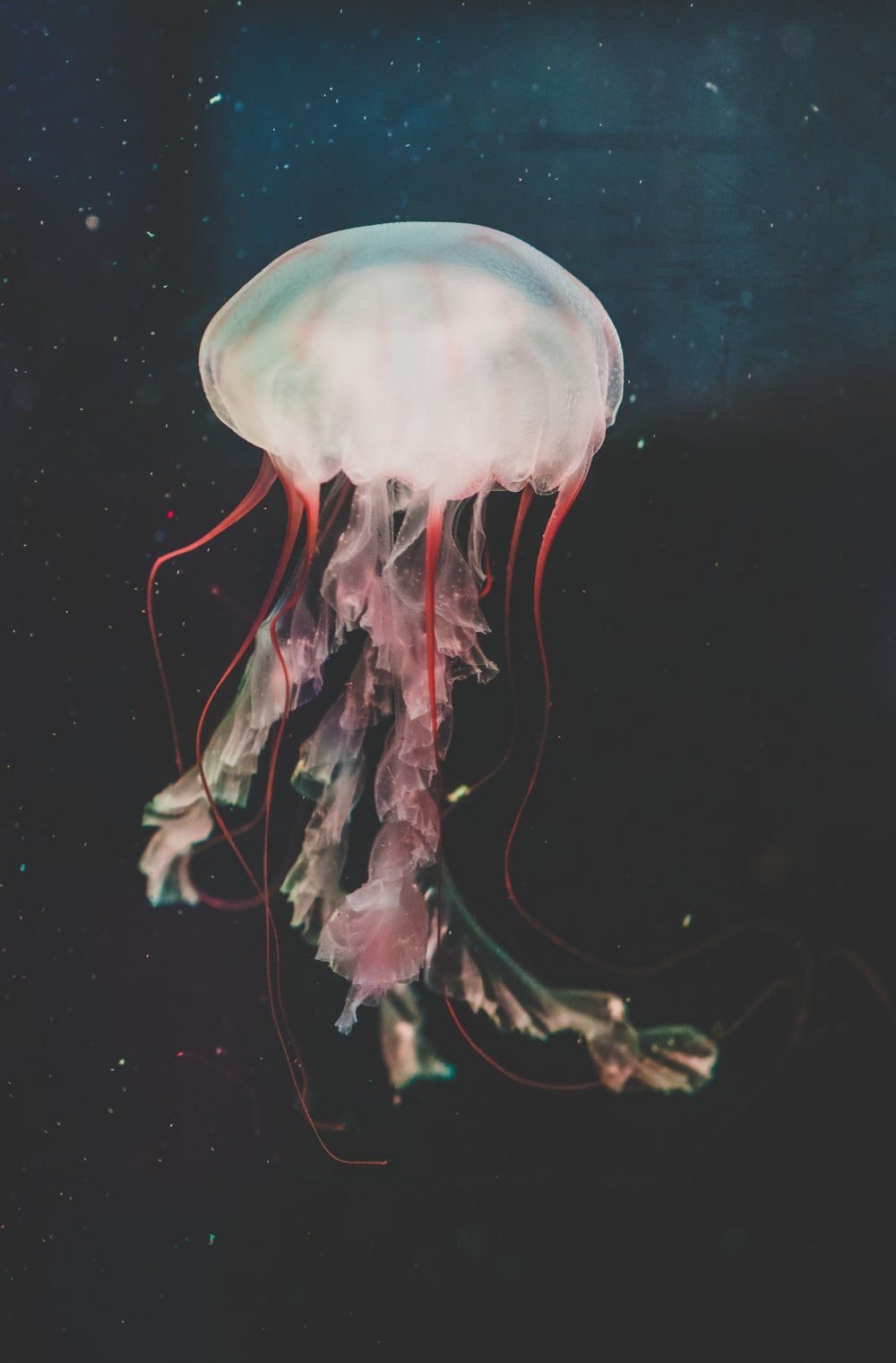 red and white jellyfish painting
