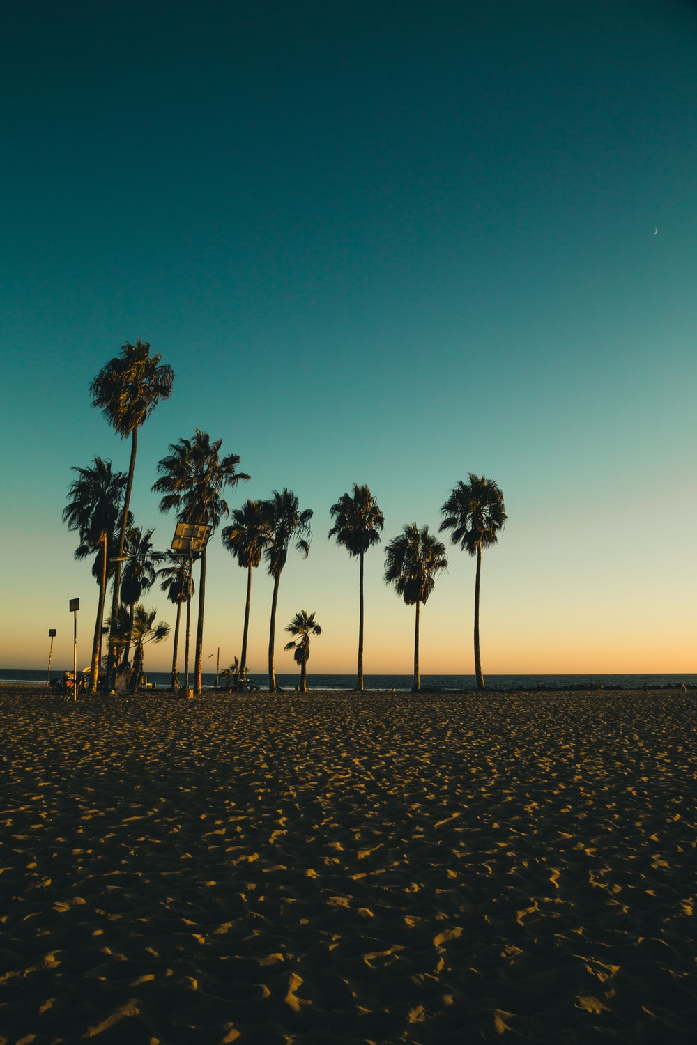 coconut trees on beach sand during golden hour