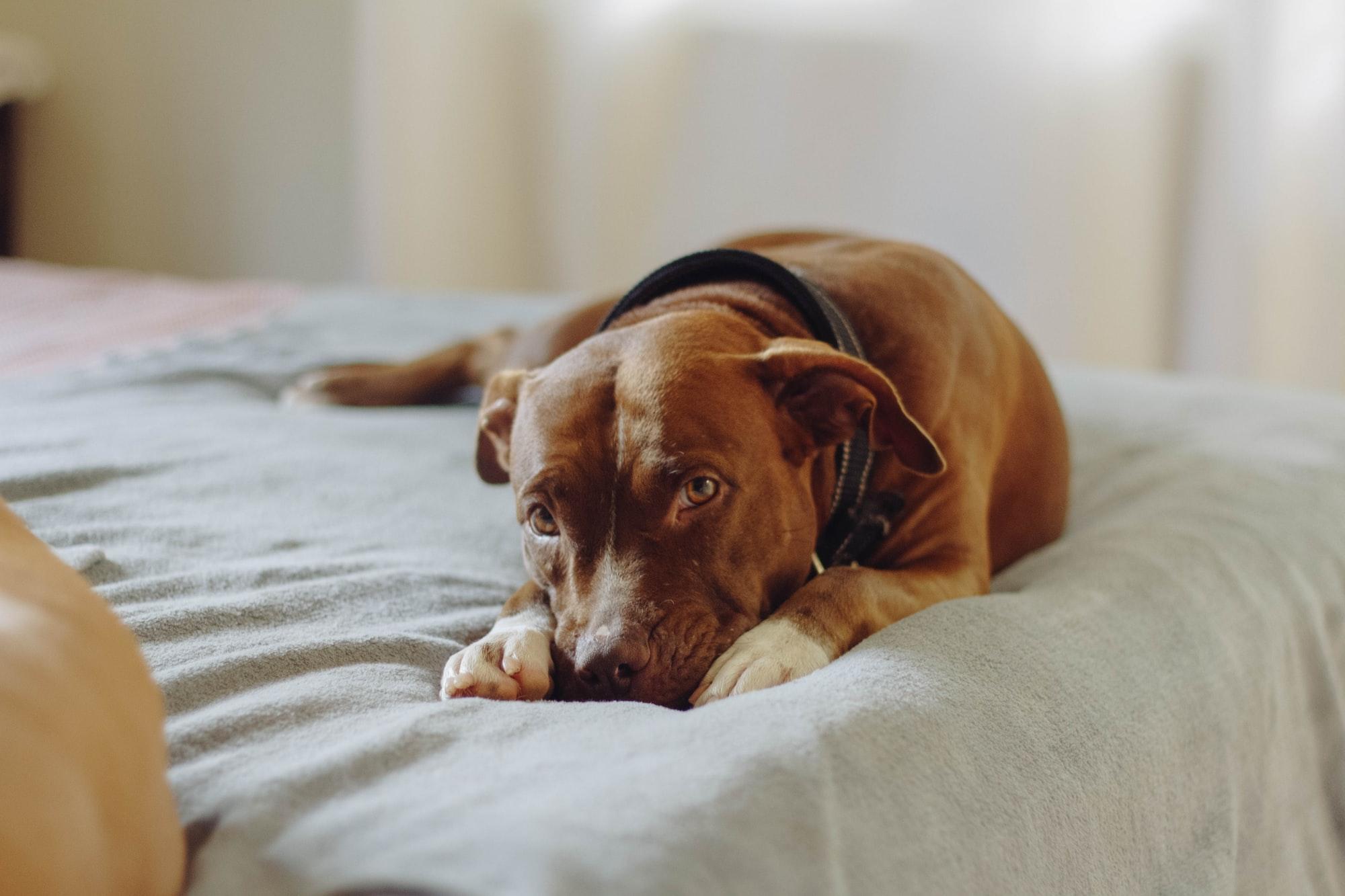 I cani possono entrare negli ospedali?