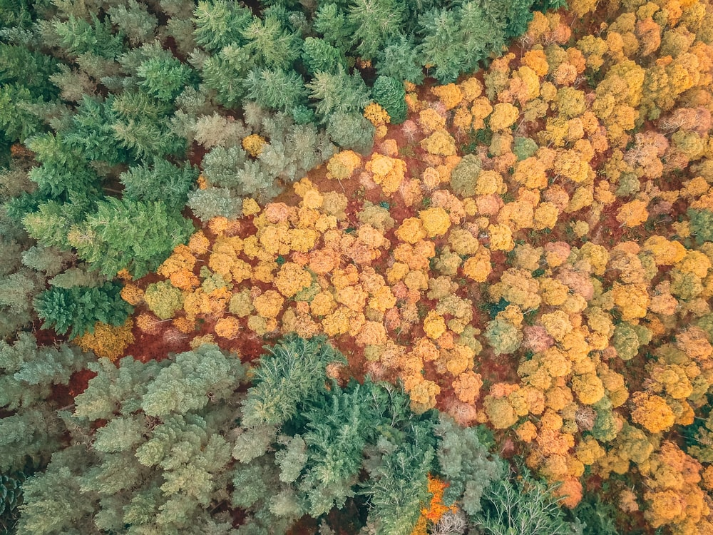 aerial photography of dried and green trees