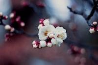 close-up photograhpy of white petaled flower