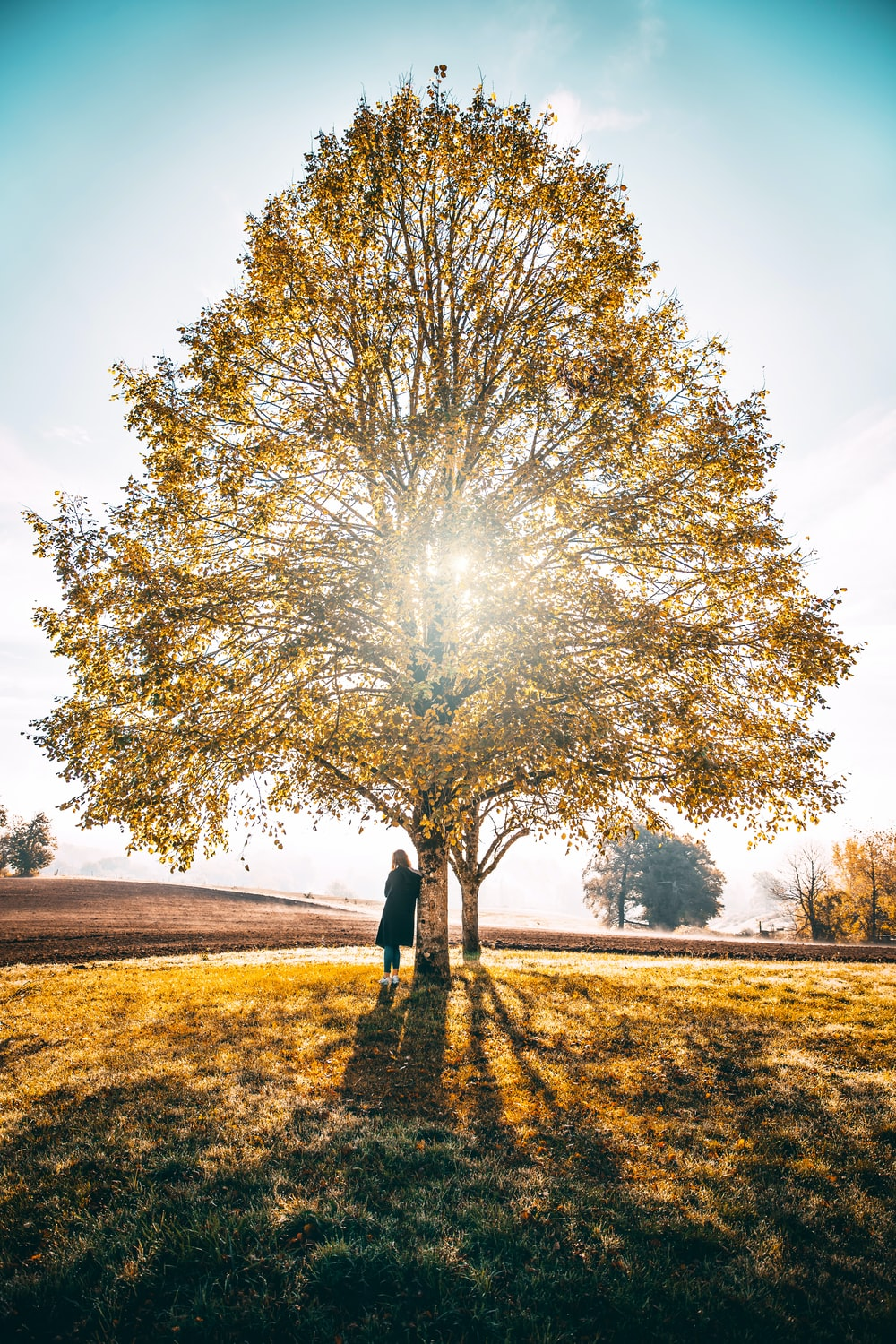 woman leaning beside tree during daytime