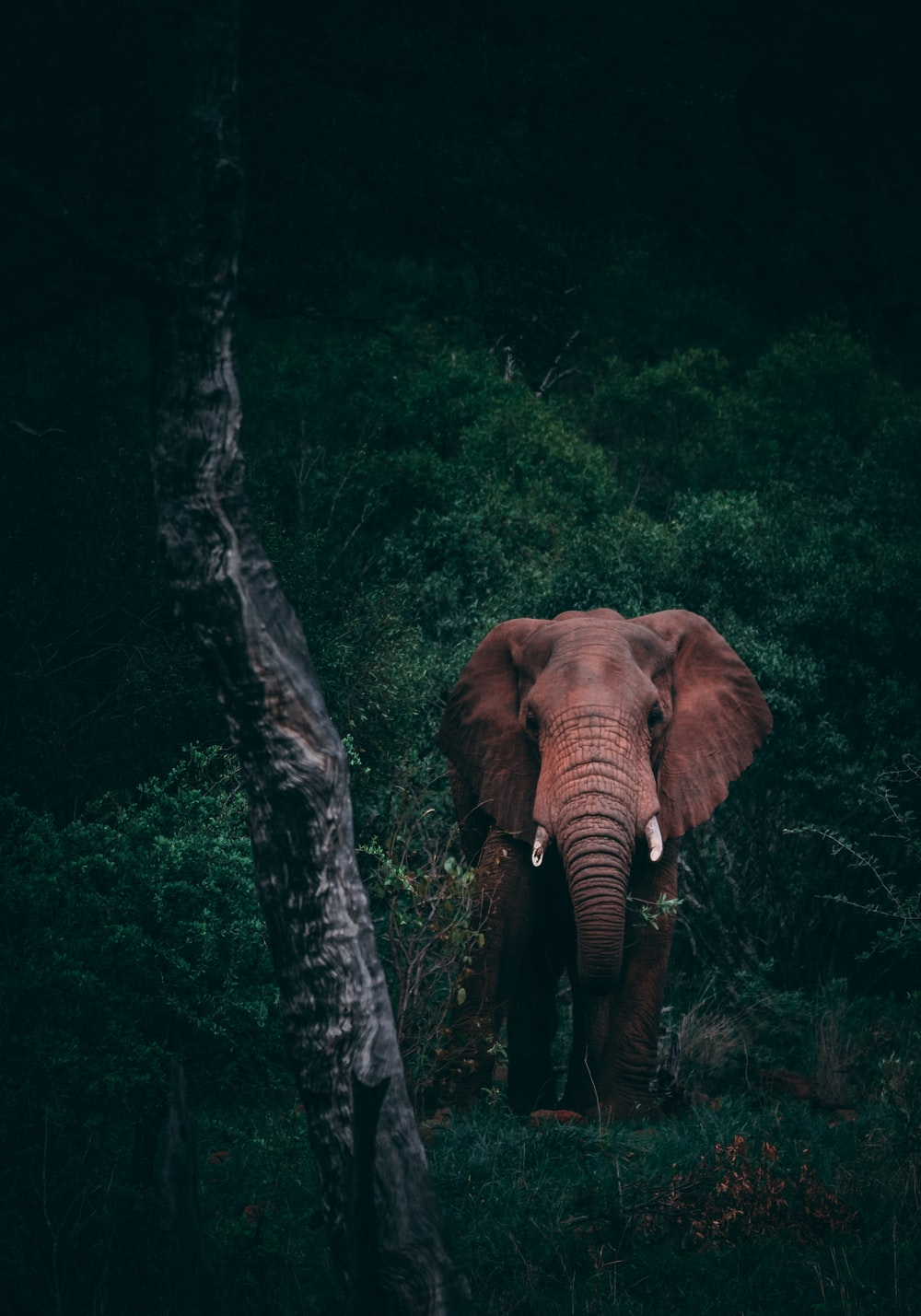 100 Wildlife Pictures Download Free Images On Unsplash