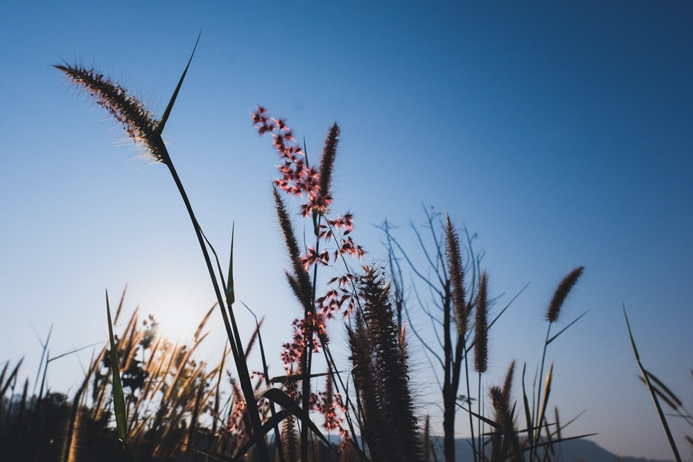 low angle photography of typha during daytime