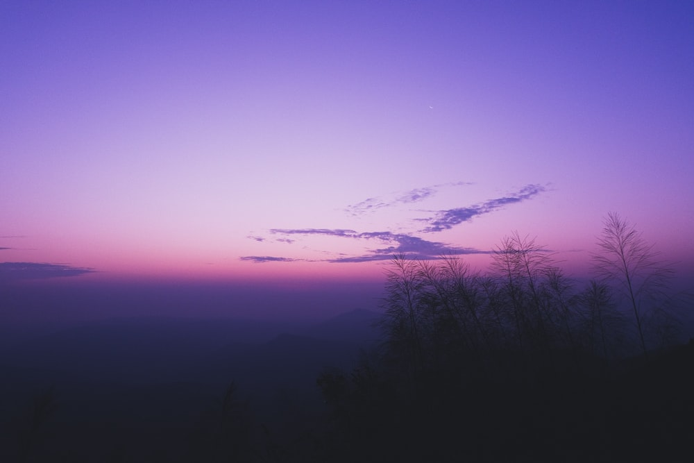 silhouette of trees during blue hour