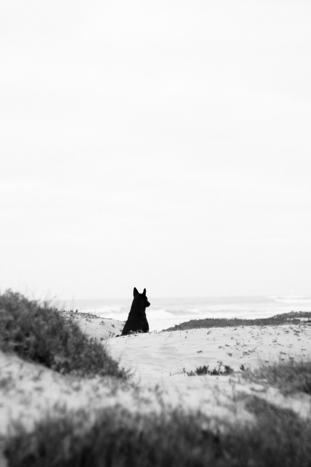 grayscale photography of black animal