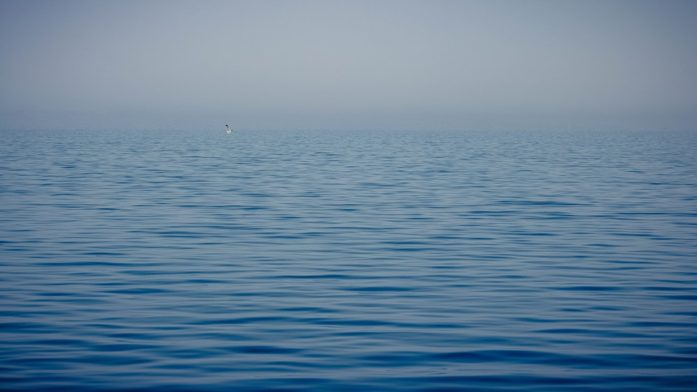 calm body of water during daytime