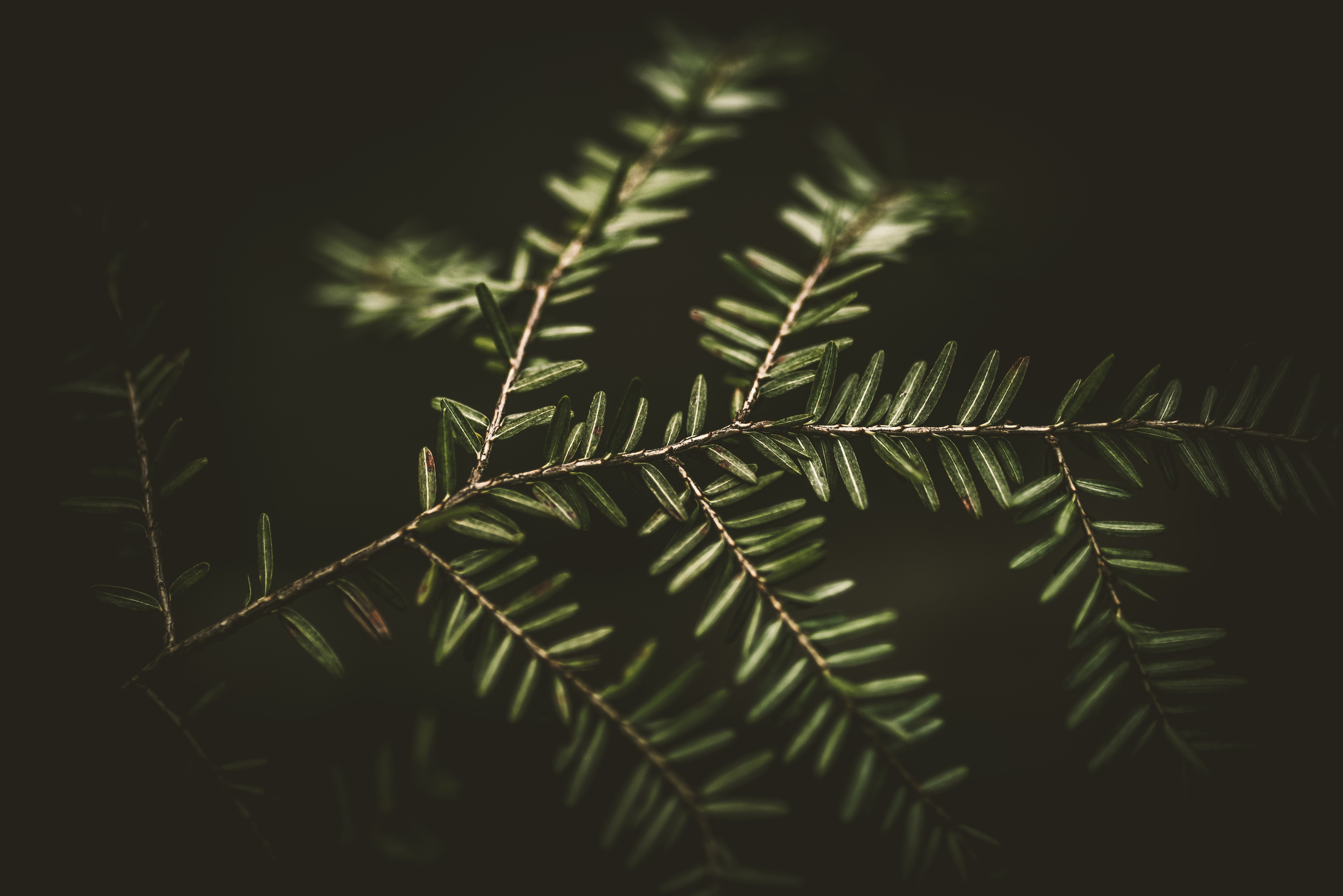 green linear-leafed plant